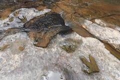 Orma del Carnotaurus del dinosauro sulla corrente vicina a terra a Phu Faek Forest Park nazionale, Kalasin, Tailandia Acqua colle Immagine Stock