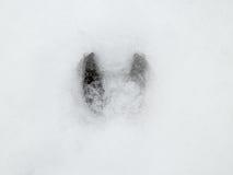 Orma del lupo e dei cervi nella foresta della neve Fotografie Stock