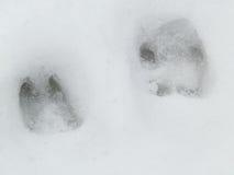 Orma del lupo e dei cervi nella foresta della neve Fotografie Stock Libere da Diritti