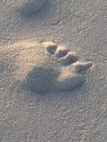 Orma nella sabbia della spiaggia Immagini Stock