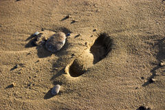 Orma in sabbia Fotografia Stock Libera da Diritti