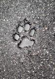 Orma su asfalto Fotografia Stock Libera da Diritti