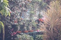 Orman ogródu tło Zdjęcie Stock