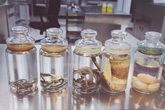 Ormar i en vetenskapslabb arkivbild