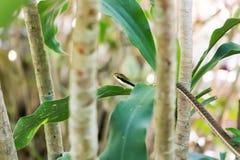 Ormar som klättrar träd i semesterorter Arkivfoton
