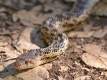 Ormart på en fotvandra slinga i trione-Annadeldelstatspark i Santa Rosa, Kalifornien - på en solig vårdag arkivfoto