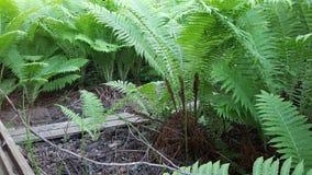 Ormbunkar i en skog Royaltyfri Foto