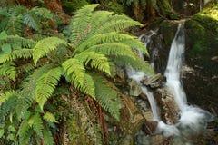 Ormbunkar med vattenfall Royaltyfri Bild
