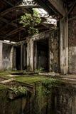 Ormbunkar, mossa och växter som växer i övergiven fabrik Royaltyfri Fotografi