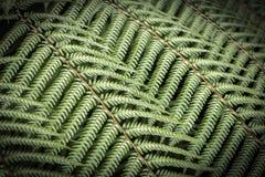 Ormbunkar Nya Zeeland Royaltyfri Bild