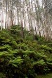 Ormbunkar och träd på ett berg sid i dalen för Victoria ` s Yarra, och Dandenongen spänner Royaltyfria Bilder