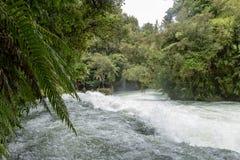 Ormbunkar som hänger över Okere nedgångar, Rotorua, Nya Zeeland royaltyfri foto