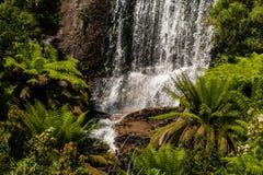 Ormbunkar & vattenfall royaltyfria bilder