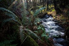 Ormbunkar vid liten vik i staten Washington Royaltyfri Bild