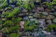 Ormbunkarna växer längs vaggar stadigt fotografering för bildbyråer