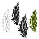 Ormbunke isolerade beståndsdelar för design på en vit bakgrund vektor Arkivfoto