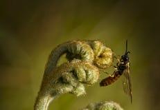 Ormbunke med biet Arkivfoton