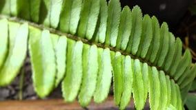 Ormbunke med gröna tjänstledigheter Royaltyfri Fotografi