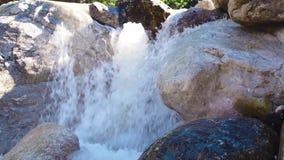 Ormbunke- och bergström, Fast flödande vatten av en bergflod, vildblomma på vattenfallbakgrunden arkivfilmer