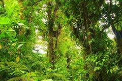 Ormbunke och skog royaltyfria foton