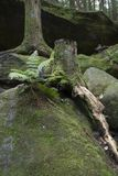 Ormbunke- och trädstubbe arkivfoton