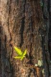 Ormbunke på trädbakgrunden Arkivbilder