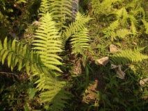 Ormbunkeblad i djungeln royaltyfri foto