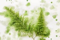Ormbunkeblad i grön målarfärg arkivfoto