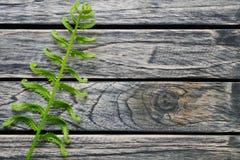 Ormbunkebladfilial på träbakgrund med kopieringsutrymme arkivfoton