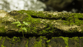 Ormbunken i natur blomstrar på fuktighet arkivfoton