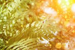 Ormbunkesidor och solljus Arkivbild