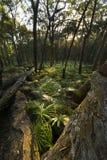 Ormbunkeskog i Munmorah tillståndsnaturvårdsområde royaltyfri fotografi