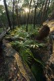 Ormbunkeskog i Munmorah tillståndsnaturvårdsområde fotografering för bildbyråer