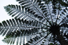 Ormbunketräd Royaltyfria Bilder
