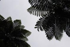 Ormbunketräd Arkivfoto