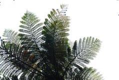 Ormbunketräd Arkivfoton