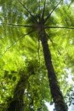 Ormbunketräd bidrar till markisen av den Monteverde molnfören royaltyfri foto