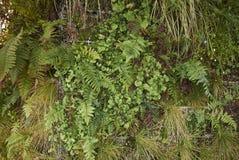 Ormbunkeväxter på en grön vägg arkivfoton