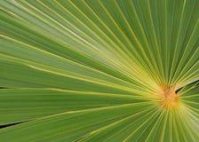 ormbunksbladgreen gömma i handflatan Royaltyfri Fotografi