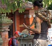 Ormcharmör i Bali 02 Arkivbild