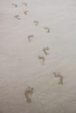 Orme bagnate su Sandy Beach Immagini Stock