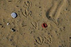 Orme del gabbiano sull'ecosistema inquinante di plastica della spiaggia sabbiosa fotografia stock libera da diritti