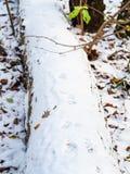 Orme del gatto su superficie della prima neve fotografia stock libera da diritti