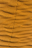 Orme del ` s dell'uccello sulla sabbia ondulata in deserto Fotografie Stock