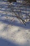 Orme dell'uccello su neve nella foresta di inverno Immagine Stock