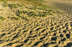 Orme e modello e struttura della vegetazione sulla duna di sabbia Immagine Stock