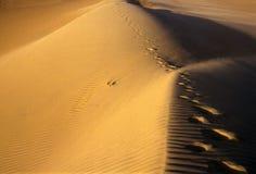 Orme nel deserto Immagini Stock