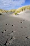 Orme nel deserto nero Fotografia Stock Libera da Diritti