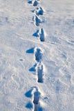 Orme nella neve Immagini Stock Libere da Diritti