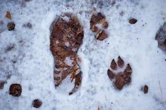 Orme nella neve Fotografia Stock